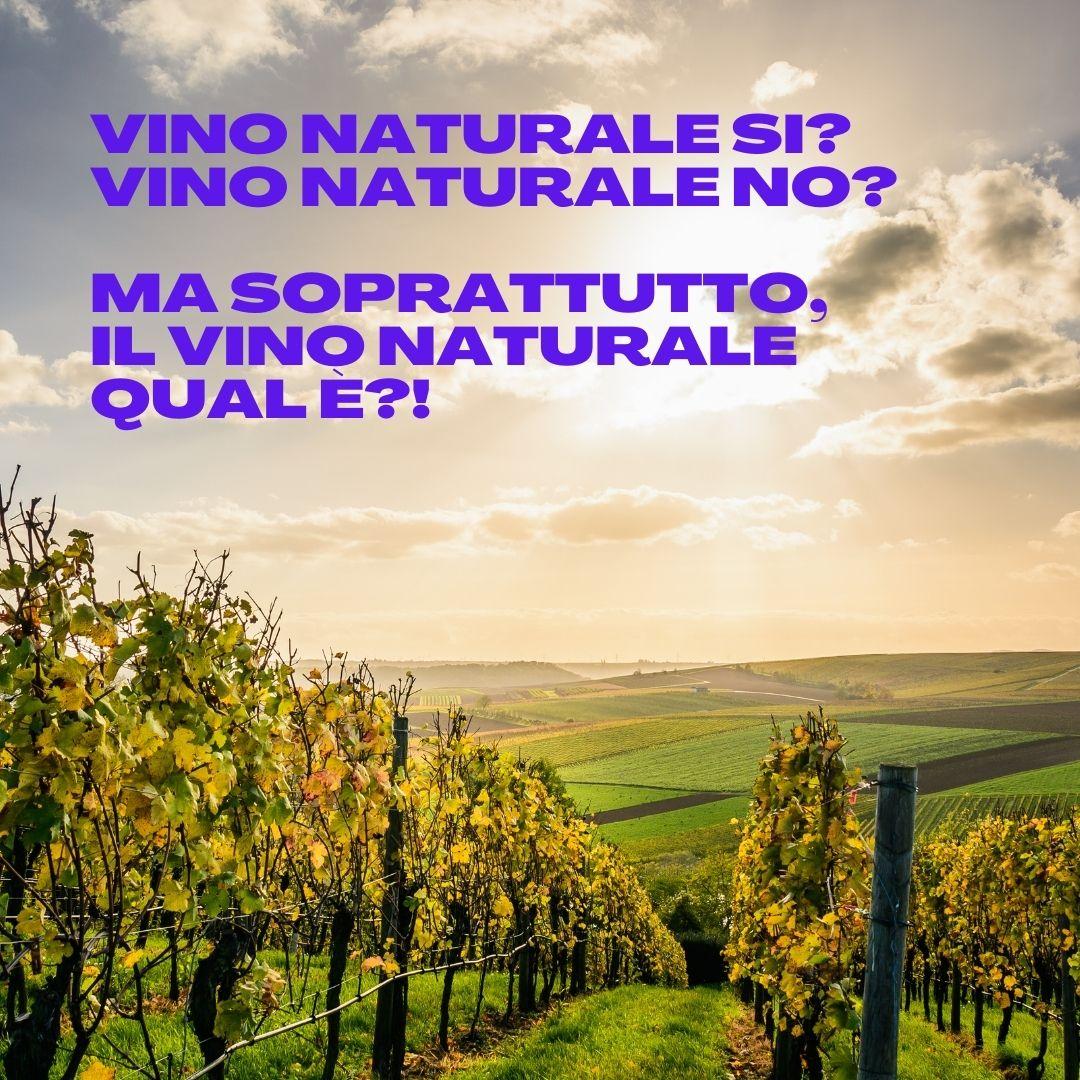 Vino naturale. L'immagine di una vigna al tramonto